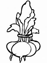 Coloring Beet Pages Beets Clipart Vegetables Template Turnips Bunch Royalty Recommended sketch template