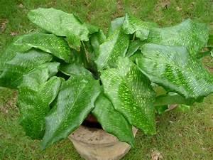Plante D Intérieur : plante verte page 7 paris c t jardin ~ Dode.kayakingforconservation.com Idées de Décoration