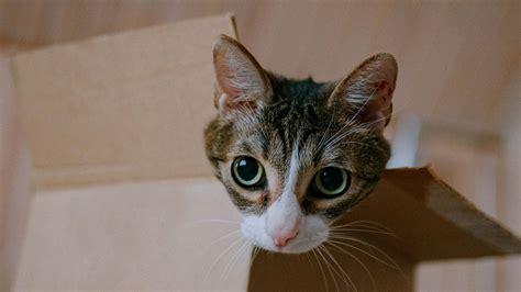 Download Wallpaper 1920x1080 Cat Cute Funny Box Full Hd