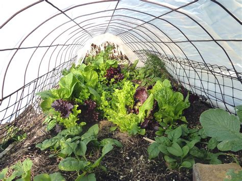 Gardeners Winter by Gardening For Discovering New Ways To Feed The