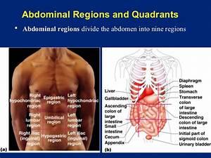 The Human Body An Orientation