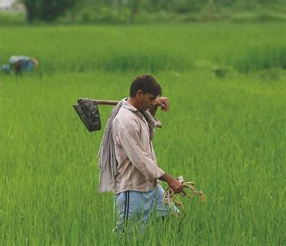 Farming Traditional Indian Agriculture Approaches Rethinking