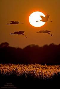 Schöne Bilder Kaufen : sch ne natur oder foto bild tiere wildlife wild lebende v gel bilder auf fotocommunity ~ Orissabook.com Haus und Dekorationen
