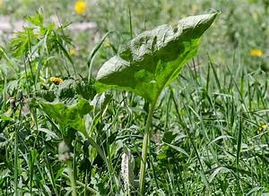 Rasen Vertikutieren Ja Oder Nein : unkrautvernichter hausmittel gyphosat oder roundup ~ Buech-reservation.com Haus und Dekorationen