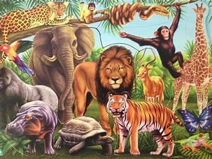 Many Different Animals Together | www.pixshark.com ...