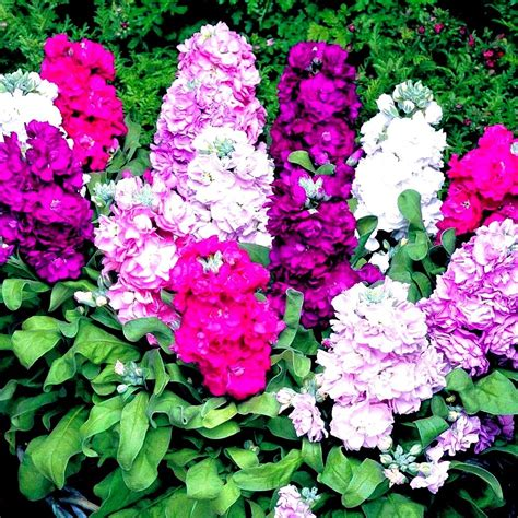 Designing A Fragrant Garden  Greenmylife  All About Gardens