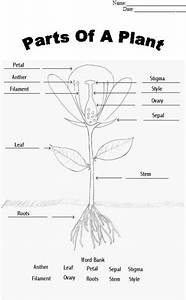 Parts Of A Plant Worksheet  Find A Flower To Dissect And Glue Appropriate Parts To Sheet