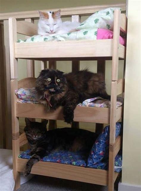 purrfect diy pallet cat beds   pampered feline