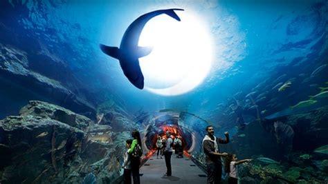 plus grand aquarium du monde des requins dans le d 233 sert