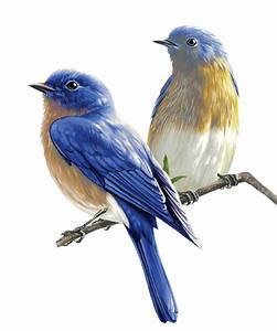 Oiseau Jaune Et Bleu : tubes oiseaux de jardin tubes petits oiseaux passeraux ~ Melissatoandfro.com Idées de Décoration