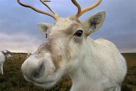 communicate science christmas science reindeer gender
