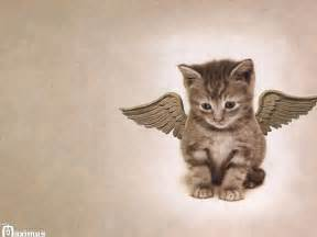 cats with wings cat with wings cats picture