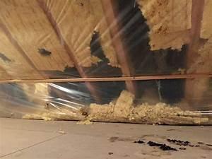 Marder Im Dach Vertreiben : was ein marder im dach anrichten kann staiger holzbau ~ Orissabook.com Haus und Dekorationen