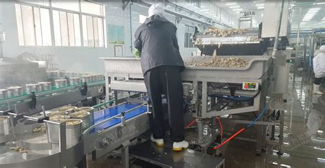 mushroom dryer slicing packing canning machine automatic mushroom bagging filling machine buy