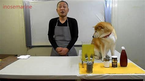 cuisiner pour chien cuisiner avec chien