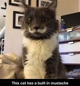 Cat with mustache | CAT'S WITH MUSTACHES | Pinterest