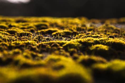 green, nature, horizon, bokeh, moss, macro, blurred
