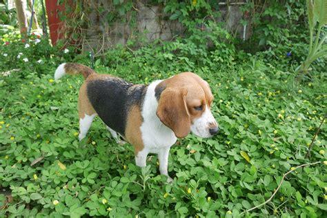Garten Für Hunde » So Gestalten Sie Ihn Hundegerecht
