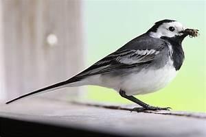Kleine Vögel Im Garten : 132 besten infos garten und natur bilder auf pinterest ~ Lizthompson.info Haus und Dekorationen