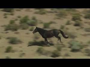 Wild Black Mustang Horse Roaming Free in Desert Valley ...