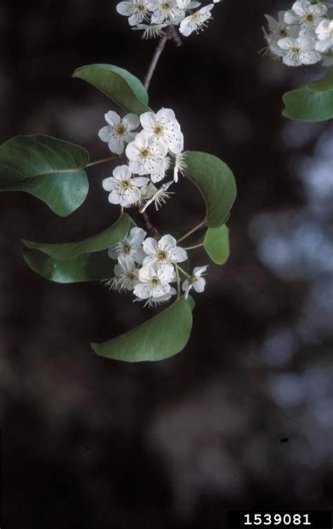 georgia native plants white blooming roadside trees