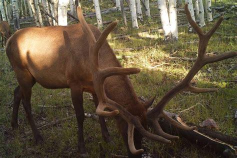 16 shed hunting utah 2016 denny austad with 94 b