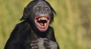 Do animals laug... Laughing