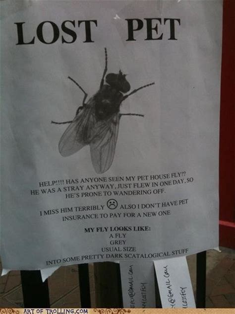 lost pethelp has anyone seen my pet housefly he was