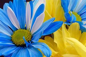 Blue And Yellow Flower Wallpaper 17 High Resolution ...
