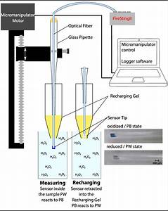 Schematic Drawing Of The H2o2 Sensor Measurement Setup  The Optical