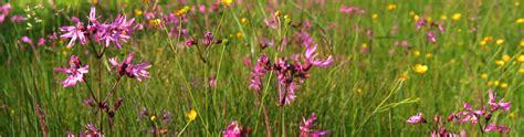 Wildblumen Im Garten by Wildblumen Garten Wohn Design