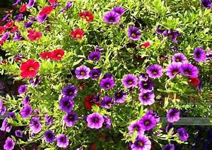 Balkonkästen Bepflanzen Beispiele : balkonkasten bepflanzen beispiele 22 calibrachoa trixi ~ Lizthompson.info Haus und Dekorationen