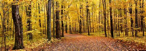 Фотообої Осінній ліс панорамне фото купити на стіну • Еко ...