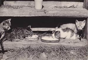 Ländervorwahl 23 : katze ich habe in meinem leben viel wunderliches gesehen ~ Orissabook.com Haus und Dekorationen