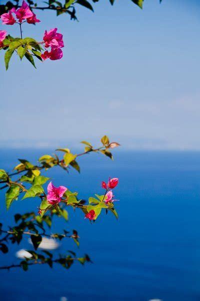 pink flowers blue sea photo