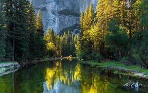 Plants, River, Forest, Trees, Landscape, Wallpapers, Hd, Desktop, And, Mobile, Backgrounds