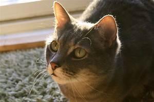 Tabby Cat Images | FemaleCelebrity