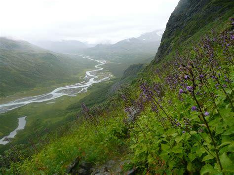 Flower path down the mountain | Sweden - Sarek National ...