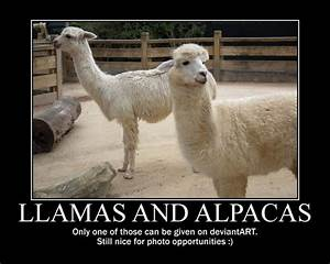 Llama Jokes Related Keywords & Suggestions - Llama Jokes ...