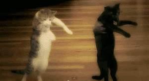 Kitty Cat dance party - Album on Imgur