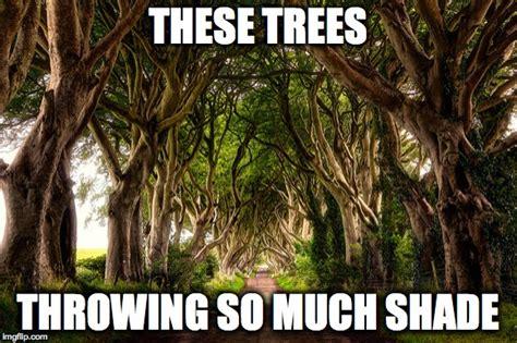 Shade Memes - throwing shade imgflip