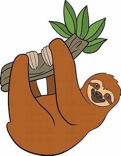 Sloth Clip Clipart Hanging Tree Cartoon Branch
