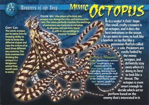 Giraffe Carpet by Image Mimic Octopus Front Jpg Wierd N Wild Creatures