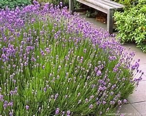 Bordures Pour Jardin : bordure jardin planter ~ Dode.kayakingforconservation.com Idées de Décoration