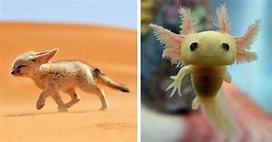 10+ Rare Animal Babies You've Probably Never Seen Before ...