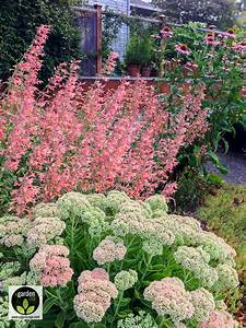 My Favorite Plant Combinations 42  My Favorite Plant