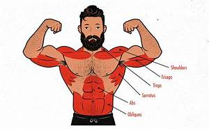The Overhead Press Guide  For Size   U2013 Outlift