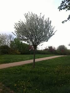 Kleine Bäume Vorgarten : kugelbaum f r vorgarten kleine b ume mit runder krone ~ Michelbontemps.com Haus und Dekorationen