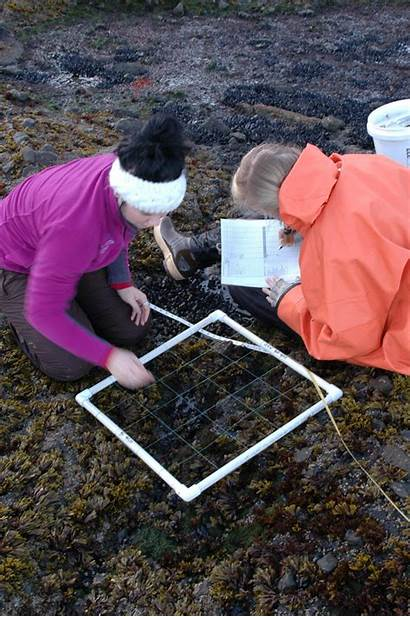 Julia Marine Transect Collecting Ashley Mussels Algae