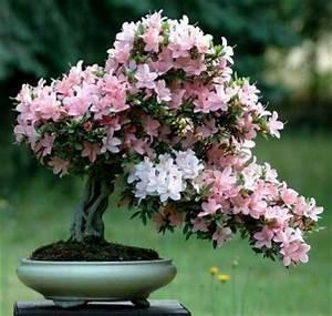 Blühende Zimmerpflanzen Pflegeleicht : gr ne zimmerpflanzen bl hende pflegeleichte topfpflanzen ~ Michelbontemps.com Haus und Dekorationen